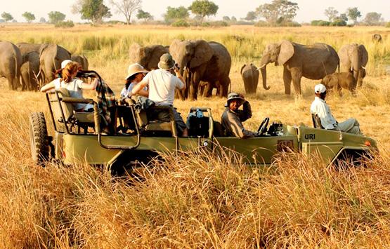 11 дней! Эксклюзивное путешествие ЮАР+Ботсвана! Посещение национальных парков Окаванге,Мореми, Савути!