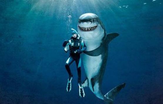 Дайвинг с акулами в ЮАР и Мозамбике + сафари
