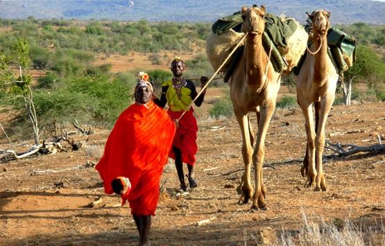 Эксклюзивное пешее сафари на верблюдах по Кении